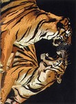 United Weavers Safari 030 73370 Double Tiger Closeout Area Rug